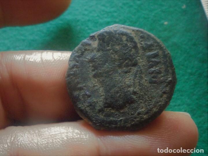 Monedas ibéricas: muy bonita moneda de la ceca de CCA , toro mitrado a izquierdas , buen peso: 14,5 gramos - Foto 2 - 211674106