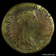 Monedas Imperio Romano: DUPONDIO DE ANTONIA - TI CLAVDIVS CAESAR AVG PM TR P IMP - 26 MM / 6.86 GR.. Lote 194289320