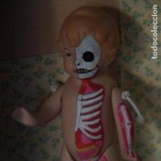 Muñecas Porcelana: MUÑECO TIPO TODDLER DE PORCELANA REPINTADO A LO FIGURA ANATÓMICA. Lote 146763546