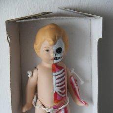 Muñecas Porcelana: MUÑECO BEBÉ DE PORCELANA PINTADO A MANO A LO FIGURA ANATÓMICA. PIEZA ÚNICA.. Lote 218724323