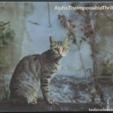 CDs de Música: ALPHA – THE IMPOSSIBLE THRILL – CD. Lote 207880616