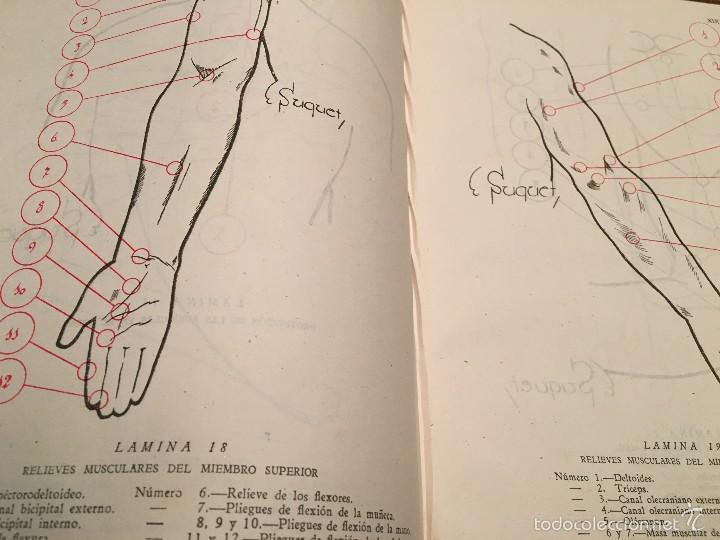sanchez brezmes. anatomia de superficie. madrid - Comprar Revistas ...