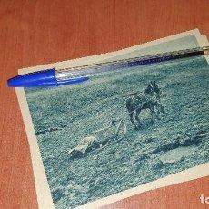 Postales: DIVISION AZUL, EN TRINEO LLEGA EL SUMINISTRO A LA PRIMERA LINEA, POSTAL SIN CIRCULAR, 15 X 10,5 CM.. Lote 194130556