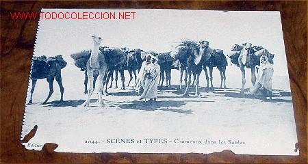 ANTIGUA POSTAL - SCENES ET TYPES - CHAMEAUX DANS LES SABLES - EDICION E.S. - SIN CIRCULAR (Postales - Postales Extranjero - África)