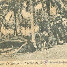 Postales: ALEJANDRIA. PALMERAS Y BEDUINOS. ENVIADA A VALLADOLID EN 1904.. Lote 24206666