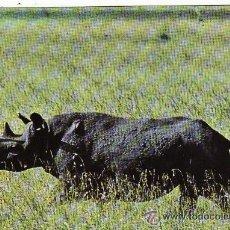 Postales: +-+ PV724 - POSTAL - WILDLIFE OF KENIA - RINOCERONTE. Lote 36406911