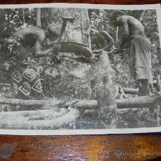 Postales: ANTIGUA FOTOGRAFIA DE GUINEA ECUATORIAL, COLONIA ESPAÑOLA, TRABAJADORES CORTANDO UN ARBOL, MIDE 10,5. Lote 37440189