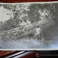 Postales: ANTIGUA FOTOGRAFIA DE GUINEA ECUATORIAL, COLONIA ESPAÑOLA, TRABAJADORES CORTANDO UN ARBOL, MIDE 10,5. Lote 37440210