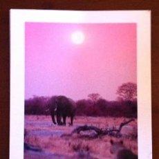 Postales: NAMIBIA - ELEPHANT - GERALD HOBERMAN. Lote 38433811