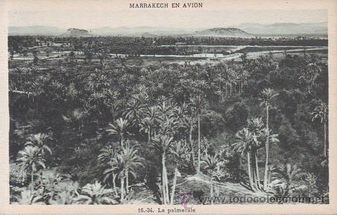 MARRAKECH EN AVION: LA PALMERAIE. MARRUECOS (Postales - Postales Extranjero - África)