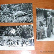 Postales: 3 POSTALES. FERNANDO POO. EX PROVINCIA ESPAÑOLA. Nº 5,6,11. AÑOS 1960. 1550. Lote 42372783