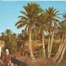 Postales: ** P73 - POSTAL - TUNISIE - OASIS DE KÉBIL - SIN CIRCULAR. Lote 46298105