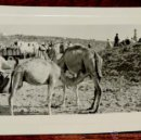 Postales: FOTOGRAFIA DE SIDI IFNI, SAHARA, 1950, MIDE 11,2 X 8,4 CMS.. Lote 54801822