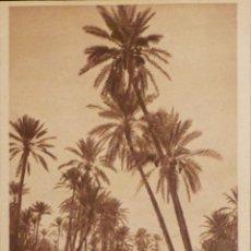 Postales: ANTIGUA POSTAL, ORIGINAL DE MARRUECOS. EDITORES L & L. NO CIRCULADA. Lote 54955713