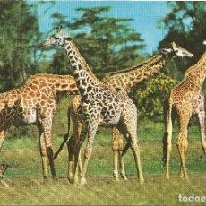 Postales: == PN698 - POSTAL - AFRICAN WILD LIFE - GIRAFFE. Lote 64650219