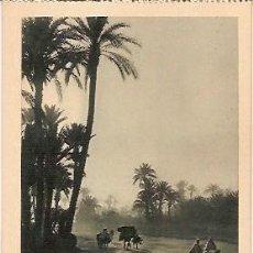 Postales: ANTIGUA POSTAL 226 MARRAKECH LA PALMERAIE FOTO FLANDRIN. Lote 70926937