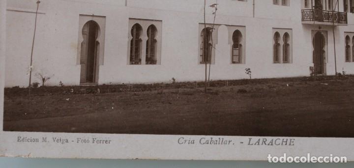 Postales: ANTIGUAS POSTALES DE LARACHE MARRUECOS VISTA PARCIAL CRIA CABALLAR – FOTO FERRER - AÑOS 40 - Foto 3 - 82750216