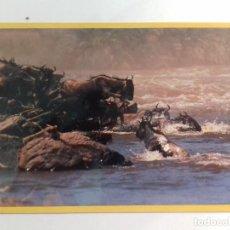 Postales: AFRICAN WILDILFE-KENYA-TARJETA POSTAL. Lote 86748316