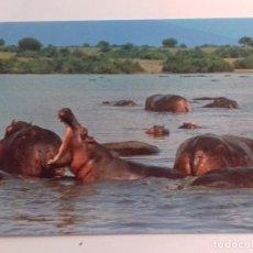 Postales: AFRICAN WILDILFE-HIPPO POOL-KENYA-TARJETA POSTAL. Lote 86748464