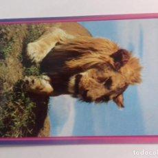Postales: AFRICAN WILDILFE-LION-KENYA-TARJETA POSTAL. Lote 86748636
