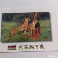 Postales: AFRICAN WILDILFE-KENYA-CHEETAH-TARJETA POSTAL. Lote 86748724
