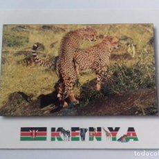 Postales: KENYA-AFRICAN WILDILFE-CHEETAH-TARJETA POSTAL. Lote 86748800