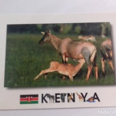 Postales: KENYA-AFRICAN WILDILFE-TOPI-TARJETA POSTAL. Lote 86749456