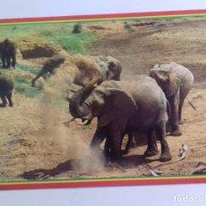 Postales: AFRICAN WILDILFE-ELEPPHANT-KENYA-TARJETA POSTAL. Lote 86750360