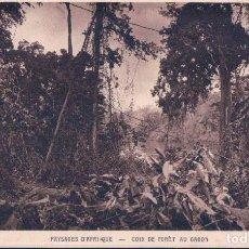 Postales: PAYSAGES D' AFRIQUE - COIN DE FORÊT AU GABON. Lote 98342491