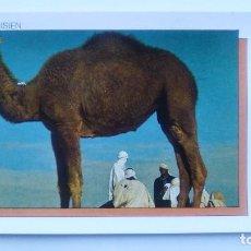 Postales: POSTAL DE LA REPÚBLICA TUNECINA, 40, TUNISIE, CAMELLO. Lote 103985519