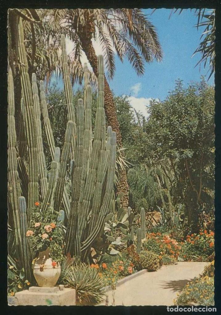 Marruecos Marrakech Jardin Exotique Du Peintre Majorelle Ed Kalicrom Nº Br235 Nueva