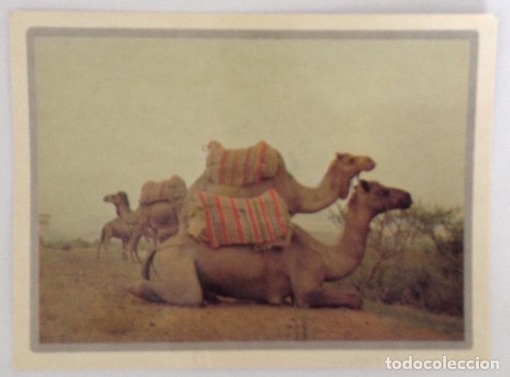 LE DROMADAIRE OU LE TAXI DU DESERT POSTAL PHOTO ALAIN MICHEL (Postales - Postales Extranjero - África)