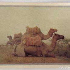 Postales: LE DROMADAIRE OU LE TAXI DU DESERT POSTAL PHOTO ALAIN MICHEL. Lote 115099623