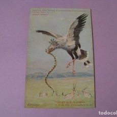 Postales: POSTAL DE SUDAFRICA. PÁJARO SECRETARIO. SERIE DE ANIMALES. SIN CIRCULAR. AÑOS 1910-1915.. Lote 116966227