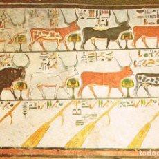 Postales: EGIPTO: VALLE DE LOS REYES, TUMBA DE LA REINA NEFERTARI. Lote 135138178