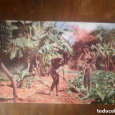 Postales: FOTOGRAFÍA POSTAL CHICAS JÓVENES ZULÚ TRABAJANDO EN EL CAMPO DE BANANAS - ANTIGUA - SIN CIRCULAR. Lote 135261050