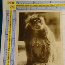 Postales: POSTAL DE ARGELIA. AÑOS 10 30. BLIDA GORGES DE LA CHIFFA. MONO BABUINO 1655. Lote 140050882
