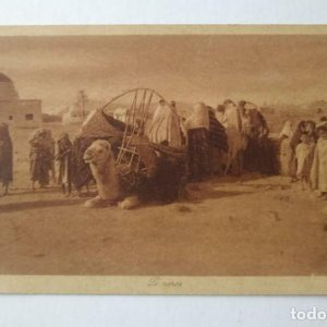 Reposo de camellos Marruecos