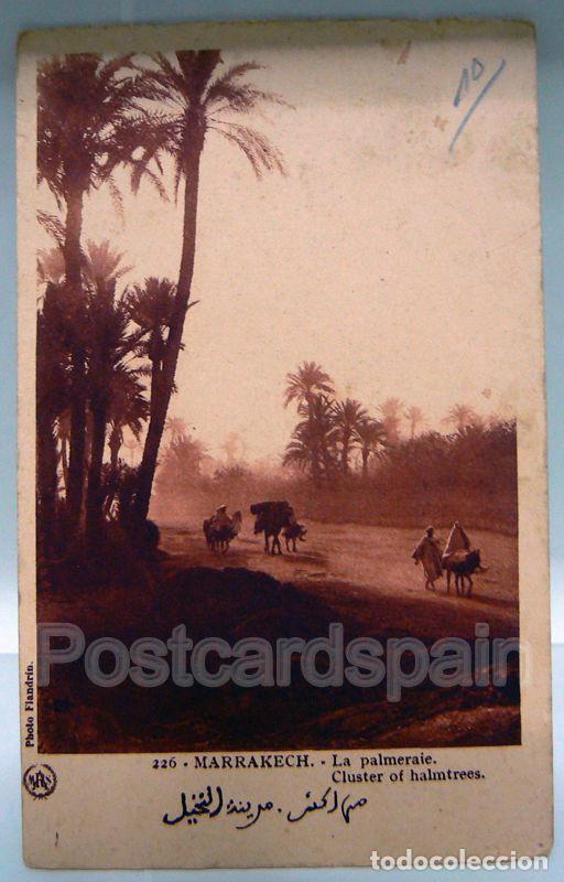 MARRUECOS MOROCCO 226 MARRAKECH LA PALMERAIE. CLUSTER OF HALMTREES (Postales - Postales Extranjero - África)