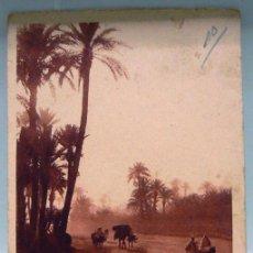 Postales: MARRUECOS MOROCCO 226 MARRAKECH LA PALMERAIE. CLUSTER OF HALMTREES. Lote 147278706
