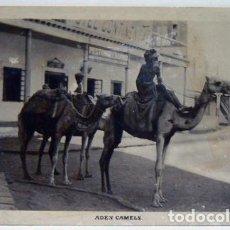 Postales: ADEN CAMELS - BOYS IN CAMEL - CHILDREN IN CAMEL - NIÑOS EN CAMELLO. Lote 147331946