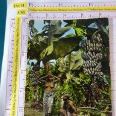 Postales: POSTAL DE COSTA DE MARFIL. PLANTACIÓN BANANERA, MUJER DESNUDA. 2130. Lote 159577550