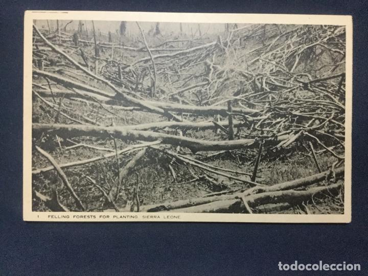 Postales: 12 POSTALES SIERRA LEONE COLONY - 1924 - SERIE 5 y 6 - THE BRITISH EMPIRE EXHIBITION - TUCK'S - SC - Foto 7 - 190813690