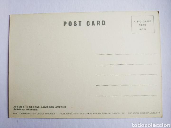 Postales: Postal Africa Rodesia after the storm Jameson avenue salisbury rhodesia - Foto 2 - 191534527