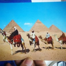 Postales: POSTAL EGIPTO ARÁN CAMELRIDERSVIN FRONT OF THE PYRAMID. Lote 194956103