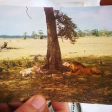 Postales: POSTAL MOZAMBIQUE GORONGOSA S/C. Lote 209021428