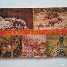 Postales: POSTAL KENIA JAMBO VIDA SALVAJE. Lote 241468110