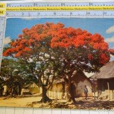 Postales: POSTAL DE ÁFRICA SUBSAHARIANA. ÁRBOL FLAMBOYANT EN FLOT. 3372. Lote 255650270