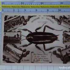 Cartes Postales: POSTAL DE TÚNEZ. ROYAUME DU CAFARD. DESIERTO SAHARA. INSECTO CUCARACHA GRILLO. 1227. Lote 266160423