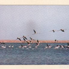 Postales: S.W.A. AFRICA DEL SUDOESTE (ACTUAL NAMIBIA). FLAMENCOS. Lote 288099928